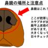 紫外線に注意⁈『犬猫の鼻鏡にできる腫瘍』とは