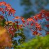 福井市幾久公園の紅葉