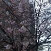 ようやくの春