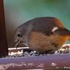 日本 2月9日の松尾池の野鳥たち