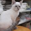 運命の出会い。ブルーで円らな瞳、モフモフしてて・・・我が家に新しい家族が増えそうです。保護猫 ヌコ Cat