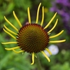 🌼エクステンションチューブ(接写リング)を使って植物と昆虫を撮影しました☺