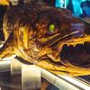 雨降ったらここだね!シーラカンスに会える 沼津港深海魚水族館【オススメ】