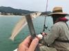 釣って楽しい♬食べて美味しい♬旬のキス釣り♬
