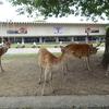 日本書紀 巻第二十二  京都国立博物館