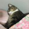 湯たんぽ猫たんぽ