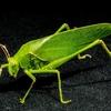 ペンタゴンはウイルスを拡散する昆虫を作ろうとしている?