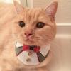 うちの猫が可愛すぎるのでご紹介します、お前ら全員見ろください!