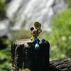 【相棒さんぽ】熊本県にある日本の滝100選「鹿目の滝」に行ってきたよ!