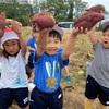 年少 秋の大収穫祭!「Sweet Potato Day」🍠