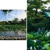 鶴岡八幡宮の蓮: 水面からツンと立ち上がった蓮の葉と花.見ているとすがすがしい気持ちにさせられます.でも---  スイレンと違って,午後に花を閉じてしまう.知りませんでした.睡蓮と蓮の違いをまとめてみました. なお,平家池のほとり旧神奈川県立美術館の建物は残されて活用されるそうです.よかった.
