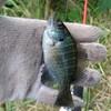 西大伍選手と釣りに行ってから3ヶ月