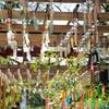 【夏詣】会津美里町の伊佐須美神社(いさすみじんじゃ)を参拝して、風鈴の音色に癒されてきた..!