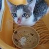 どぶ(生活排水が流れる場所)のようなとこで生まれ育った猫が・・
