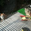 two new cats visit.