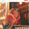 高知でハルウララにaitai 高知競馬Official Book 2004