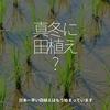 403食目「真冬なのに田植え?」日本一早い田植えはもう始まっています