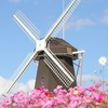【大阪】11月でも満開のコスモス畑『鶴見緑地公園・風車の丘大花壇』