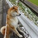 柴犬トムと多趣味で貧乏管理人の日常雑記ブログ