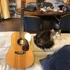 池袋の楽器屋でブルースじいさんに会った。