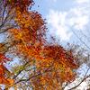【一日一枚写真】黄金の銀杏並木道 Part.11【一眼レフ】