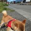 秋風のお散歩