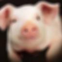 豚のメモ帳