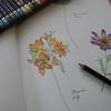 レイラさん練習中です・世界一美しい花のぬり絵BOOKより