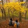 ダイラ 紅葉の天幕と落ち葉の絨毯 (ヤブコギネットオフ会) 2008.11.09