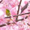 ✨春分~今後一年の宇宙模様~Spring ingress~