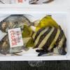2017年6月8日 小浜漁港 お魚情報