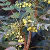黄色いかわいいお花です