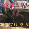 【シンボルツリー】庭に木を植えました!
