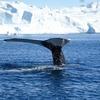 【グリーンランド旅行記】4:雨の日は博物館、晴れた日は鯨を見る。