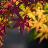 砧公園で紅葉撮影しました。 #紅葉
