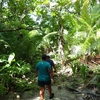 JOCV環境教育隊員としてパラオで行うミッション