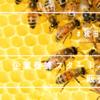 【「企業養蜂」スタートパックを販売】研修までついた秋田屋本店の企業養蜂スタートパックセット