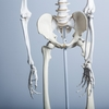 骨盤のゆがみの正しい解釈
