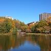 徳生公園の紅葉、、、