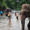 非日常感が半端ない!超おススメ・タイで象とお友達になれるかも!?な体験