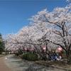 風林火山で有名な川中島の戦いの地「川中島古戦場史跡公園」の桜