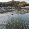 竜ヶ池(長野県須坂)