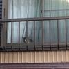 3-221   グレコ家猫日記〜外を眺めるのニャ〜