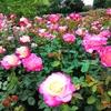 コーンウォールからロンドンに行きリージェンツ・パークでバラを見る(イギリスのロンドン)