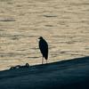 🐦野鳥の回【54】🆕  佇む