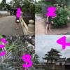 高松城(玉藻公園)はちょこっと散策に最適