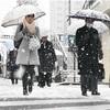 水戸で積雪12cm…寒気12日頃までの見込み