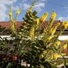 黄色満開 喜ばせて Yellow full bloom