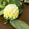 ちりめん細工 菜の花の香袋