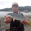 伊東港 カゴ釣り釣行